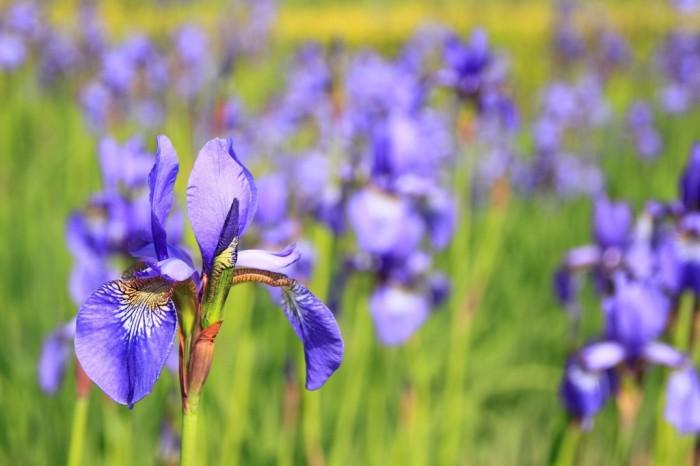 Realizzazione siti web per giardinieri e imprese di manutenzione giardini sul Lago di Como